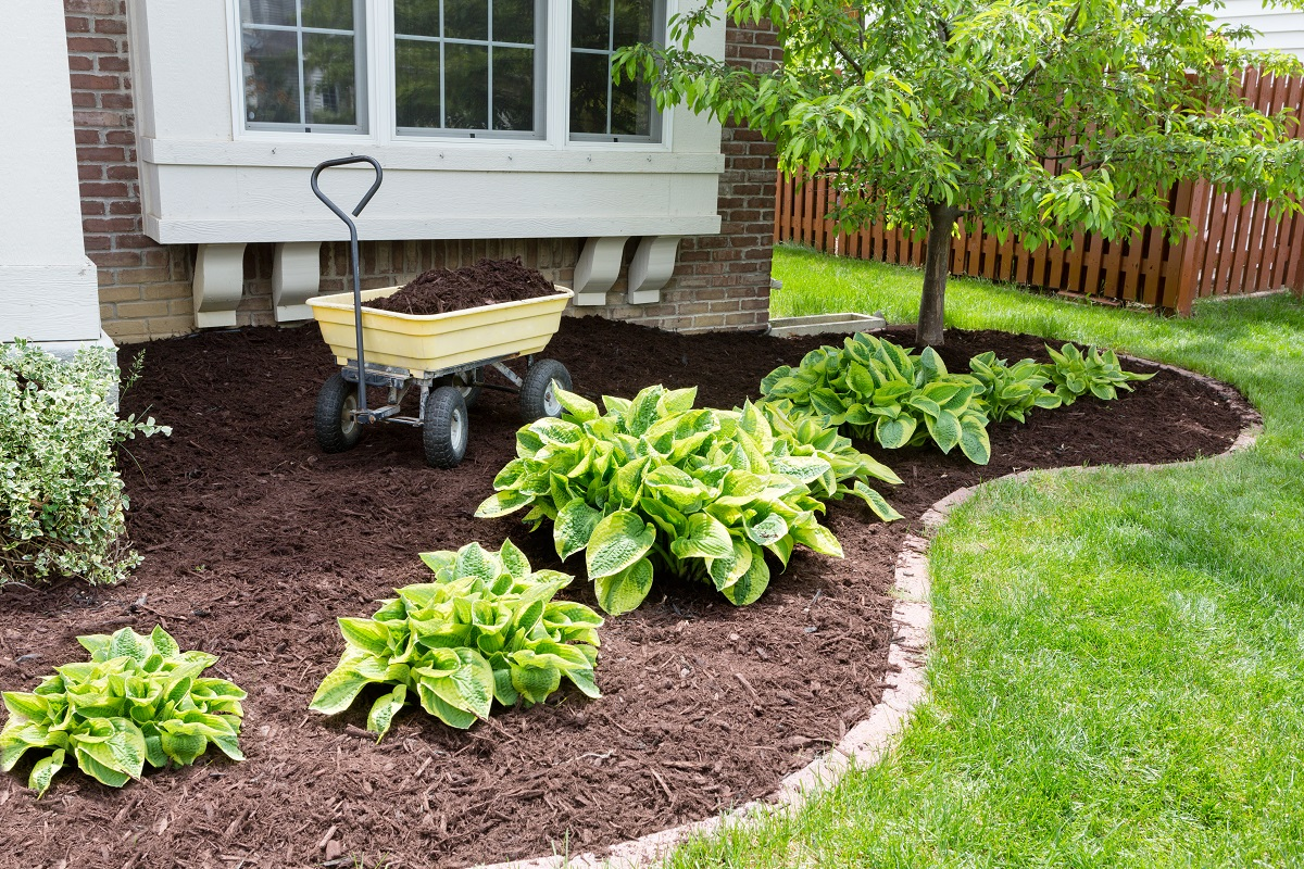mulching the soil