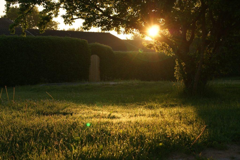 backyard at dawn