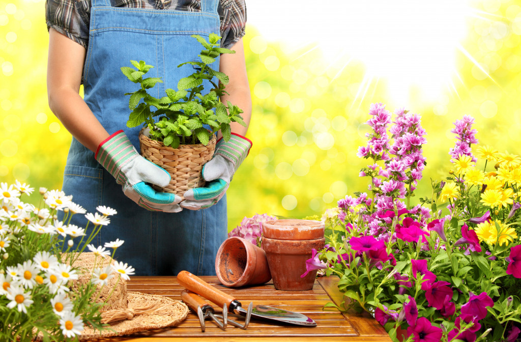 a person holding a pot of plant